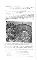 Cultivo de la bartonella bacilliformis de un caso de verruga